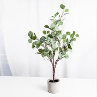 유칼립투스 차콜 나무 화분