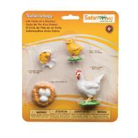 662816 닭의성장과정 Life Cycle of a Chicken