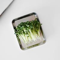 스텐 만능 조리 트레이 사각 접시 15.5cm