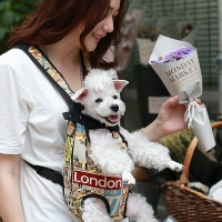 펫데일리 애완 전용 포대기 - 트래블 런던