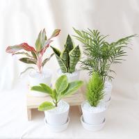 러블리 화분 모음전 공기정화식물 15종