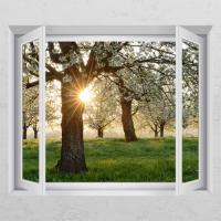 ca645-햇살비추는나무_창문그림액자
