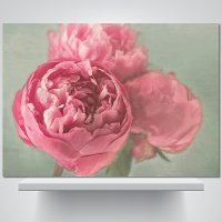 오월의 꽃 - 감성사진 폼보드 액자