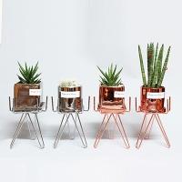 미니화분스탠드+공기정화식물세트