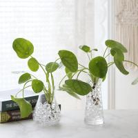 수경재배 필레아페페 공기정화 수중식물