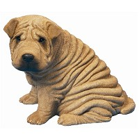 Chinese Shar-pei(차이니즈 샤페이)_MS14801
