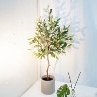 모던 올리브 나무