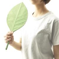 +d Ha Uchiwa 나뭇잎 부채