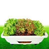 야채를 집에서 키우는 자동급수 텃밭화분 바퀴포함