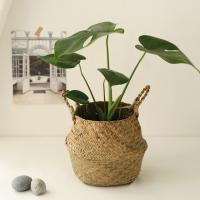 [plant] 식물 몬스테라 해초바구니set