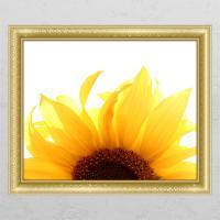cd334-꽃잎해바라기_창문그림액자
