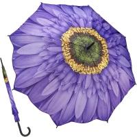 위스테리아 데이지 - 원목자동장우산