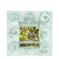 COLONIAL CANDLE 809 티라이트 9pk 캔들 월계수 열매