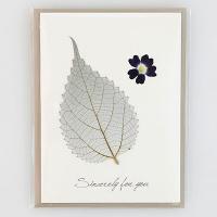 [향기카드] 압화미니카드 - 모시잎