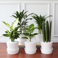 러블리 중형 화분 모음전 공기정화식물 12종