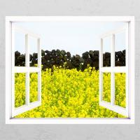 cd337-유채꽃과담벼락01_창문그림액자