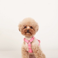 SOFT HARNESS_NEON PINK