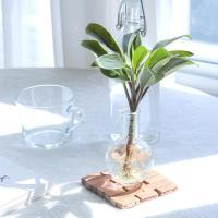메이크정글 GLASSY NO.1 공기정화식물 유리병