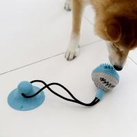 제이코 애견장난감 흡착판 공 장난감