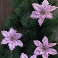 포인꽃 12cm 퍼플