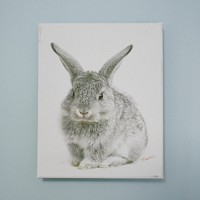 art canvas #T009 - baby bunny
