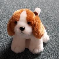 Puppy Passion 퍼피패션