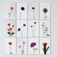 pf047-멀티액자_다양한식물