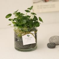 [plant] 워터코인+시푸룩스 수경재배 2SET