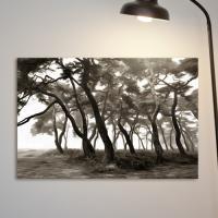 cv422-안개소나무숲_흑백_중형노프레임