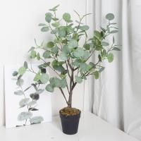 모던 펄 유칼립투스 나무