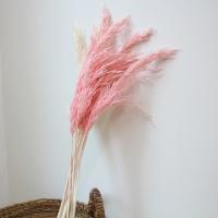 깃털 팜파스(프리저브드)