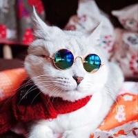 여름에는 냥글라스 도글라스