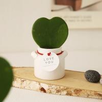[plant] 사랑담은 하트호야 우유병화분