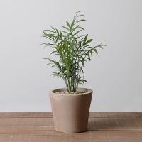 테이블야자 공기정화식물 이태리토분 반려식물