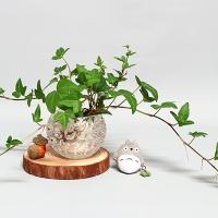 도토리마을 아이비-천연가습&수경