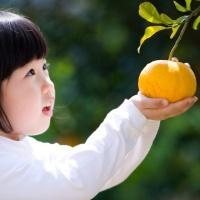 [그린제주] 제주직송 조생감귤 밀감 노지감귤 5kg