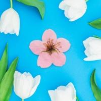 사과나무꽃카드 세트