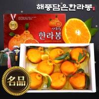 [해풍담은] 한라봉 로얄과 10kg(31~35과)