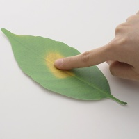 +d Leaf Thermometer 나뭇잎 온도계