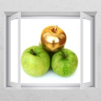cd350-풋사과금사과(여러개)_창문그림액자