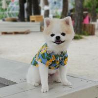 핸드메이드 강아지 썬플라워 커플룩 /강아지 셔츠