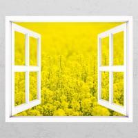 cd343-유채꽃밭03_창문그림액자