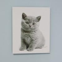art canvas #T011 - curious kitten