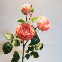 조화 영국 장미