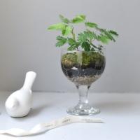 미모사 생화 이끼 테라리움 DIY 카페 인테리어 소품