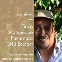 [송도동커피공장]과테말라 핀카 알로테페케 파카마라 SHB Micro Lot 200g