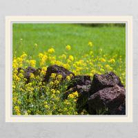 cd338-유채꽃과담벼락02_창문그림액자