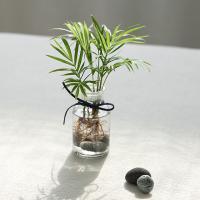 수경식물 - 테이블야자 투명시약병set
