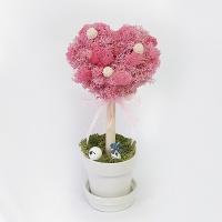 [공기정화식물] 스칸디아모스 하트나무 J_79