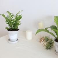 공기정화식물 4종 + 화분세트